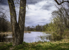 Bird Sanctuary (jsleighton) Tags: river walkill tree sanctuary bird new paltz landscape