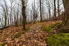 First Days of Spring at Frontenac State Park (Tony Webster) Tags: frontenac frontenacstatepark lakepepin minnesota mississippiriver earlyspring forest leaves spring statepark trees unitedstates us