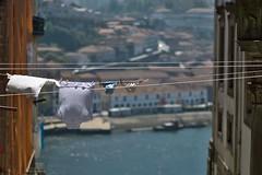 Drying Day over the Douro (adzman_808) Tags: fuji fujifilm fujixpro2 fujifilmxpro2 xpro2 xf56 washingline washing douro porto portugal outdoors naturallight