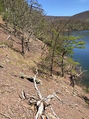 shale barren at marina site (Pete&NoeWoods) Tags: huntingdoncounty shalebarren raystownlake f16sch03