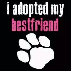 ADOPT BF (dflmanagement) Tags: dog rescue cat animal pet shelter adopt breeder