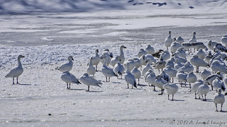 Sizing up the Flock