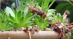 Hausbesuch! - home visit! (Jorbasa) Tags: persuasion überzeugungskraft tier animal insekt jorbasa wetterau germany deutschland besuch visit