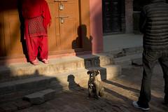 NPL - Nepalese & dog (VesperTokyo) Tags: katmandu kathmandu asia nepal nepalese ネパール人 dog bhaktapur morning
