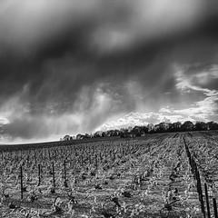 House (ZeGaby) Tags: blackandwhite clouds hdr house lx15 landscape lumix panasonic paysages vine vineyards bisseuil grandest france fr