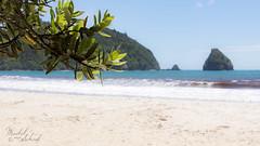 Bokehlicious (Maikel van Schaik) Tags: newzealand secluded beaches beach water bokeh leafes mountain rock crazy hike white sand turquoise blue maikel van schaik nikond600 nikon 28300 35