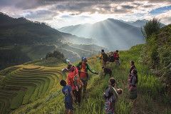 Joyfully (KRW_GNS) Tags: agriculture asean asia asian beautiful curve earth ecology environment farm farming field fields food green harvest hill kids land landscape mountain nature paddy plant plantation ray rice rough rural sunlight sunset terrace terraced tourism travel twilight valley vietnam