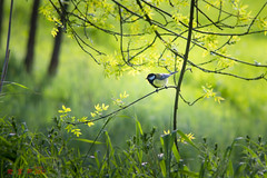 pajaro de primavera