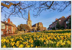 Astbury, Cheshire in spring 2017 (Paul Simpson Photography) Tags: stmarys church religion astbury cheshire daffodils nature villagegreen tree lgg3 mobilephonephotography paulsimpsonphotography photosof photoof imagesof imageof march2017 flowers churchspire steeple spring