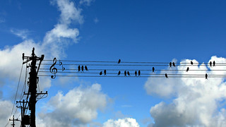 waltz of swallows (arzignano - vicenza, italy)