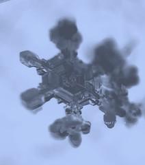 2017-03-22_05-55-46 (tpaddison1) Tags: snowflake macro hiddenworld