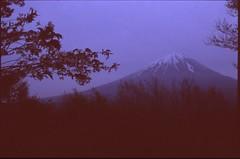 (✞bens▲n) Tags: pentax lx fa 43mm f19 limited film slide provia 400x at800 japan yamanashi mountain fuji fujisan flowers