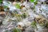 Keep it simple... (Leitratista) Tags: milkweed garden explore nature moment lovephotography nikonshots nikond3400 nikoncapture 1855mmafpvrkit kitlens flickrfind flickrfriday snapseed cc throughherlens