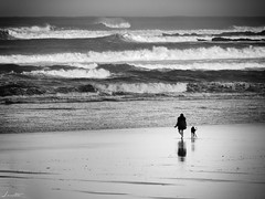 En buena compañía (Jaime Martin Fotografia) Tags: asturias gijon blancoynegro nature bw sea blackandwhite