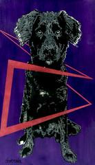 Lubisomem - Preto - Pretosomem - Pretinho - Monstro (Araujo_Ramon) Tags: cachorro catioro stencil roxo purple rosa pink vetor vector dog preto black