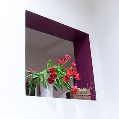 Tulipes aux œufs frais (Clydomatic) Tags: fleurs tulipes fenêtre mur blanc œuf cadre
