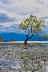 That Wanaka Tree (Robyn Furtado) Tags: wanaka tree thatwanakatree newzealand nz new zealand calm beautiful otago mountains southernalps reflect refelction