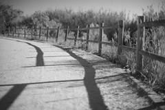 Interrupted Shadows (Capturedbyhunter) Tags: fernando caçador marques fajarda coruche ribatejo sorraia santarém portugal pentax k1 revuenon 112 f12 12 55mm 55 mc black white preto e branco monocrome monochrome monocromático street photography fotografia de rua manual focus focagem foco outdoor