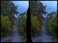 K1347 am Teufelsbach 3-D / Stereoscopy / CrossView / HDR / Raw (Stereotron) Tags: sachsenanhalt saxonyanhalt harz mountains k1347 teufelsbach heimburg elbingerode hüttenrode wald herbst autumn indiansummer gebirge europe germany crosseye crosseyed crossview xview cross eye pair freeview sidebyside sbs kreuzblick 3d 3dphoto 3dstereo 3rddimension spatial stereo stereo3d stereophoto stereophotography stereoscopic stereoscopy stereotron threedimensional stereoview stereophotomaker stereophotograph 3dpicture 3dglasses 3dimage twin canon eos 550d yongnuo radio transmitter remote control synchron kitlens 1855mm tonemapping hdr hdri raw 3dframe fancyframe floatingwindow spatialframe stereowindow window ostfalen ostfalia hardt hart hercynia harzgau