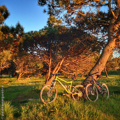 Golden Hour (Pedro Nogueira Photography) Tags: pedronogueira pedronogueiraphotography photography mobilephone telemóvel iphone5 iphoneography outdoor sport desporto lazer leisure mtb btt mountainbike bikeride voltadebicicleta goplayoutside stravacycling