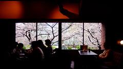 Flower Watch (H.H. Mahal Alysheba) Tags: indoor tokyo sakura cherry cherryblossom snapshot nikon d800 carlzeiss zeiss distagon 28mmf2