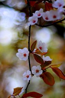 час цвітіння