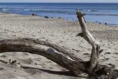 Left by a Higher Tide (brucetopher) Tags: beach sand time erosion decay driftwood wood branch tree fallen washedashore washashore tide beaches ocean sea atlantic