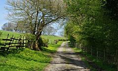 Near Coldwall Bridge (Blue Sky Pix) Tags: lanes drystonewalls quiet peaceful walking rambling exercise countryside derbyshire peak district national park england pentax green heavenonearth alwayshappy