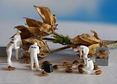 Tiny people - Samenraub2.jpg (J.Weyerhäuser) Tags: hmmmakro seed tinypeople preiser csi h0 figures miniature mini