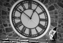 Sentry (Alexander Day) Tags: bird birds clock clocks clocktower vulture stone duke farms alex day alexander buzzard new jersey