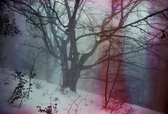 (Malykhanov) Tags: crimea cloud cold color dark dream forest film fog filmphoto snow woods wood winter 35mm analog atmosphere silhouette horses mist mysticism trip travel trees tree