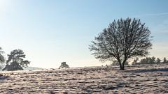 Winter auf dem Mähhorn / Winter on Mähhorn hill (Tobias Keller) Tags: 169 backlight bavaria bayern deutschland donauries gegenlicht germany heimat huisheim landschaft mähhorn schnee schwaben sonne swabia winter home landscape sunshine geo:lat=48818509600005 geocountry camera:make=panasonic exif:isospeed=160 geo:lon=107216746 geostate geocity geolocation camera:model=dmcg5 exif:lens=lumixgvario1442f3556 exif:aperture=ƒ80 exif:focallength=36mm exif:model=dmcg5 exif:make=panasonic lumixgvario1442f3556 panasonicdmcg5