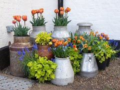 Eclectic mix (oh.suzannah) Tags: tulips churns display flower