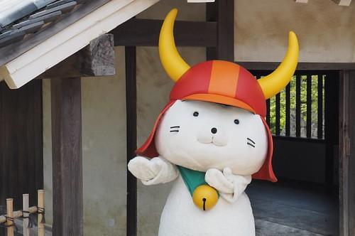 這傢伙好可愛啊啊啊啊啊啊  彥根喵  #2017京都遊