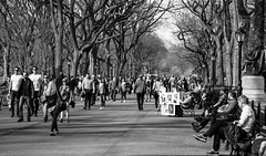 Views of Central Park. (The city guy ☺) Tags: centralpark newyork walking walkingaround walkinginthecity outdoors monochrome city people park