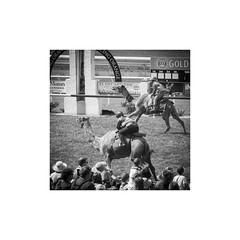 Winning post (ssoross1) Tags: towacpark orange camels camelraces