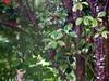 Rain Washed Leaves. (dccradio) Tags: lumberton nc northcarolina robesoncounty leaves foliage tree trees backyard rainy rainyday rain raining woods wooded nature landscape outside outdoors leaf greenery treelimbs sticks project365 photooftheday photo365