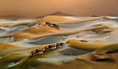 Andamento lento (Zz manipulation) Tags: art ambrosioni animali colori cielo zzmanipulation sera sole sabbia cammelli carovana deserto calore