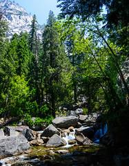 Two Days in Yosemite: stitched (24) (Images by John 'K') Tags: california day2 panorama nationalpark nikon nps yosemite yosemitenationalpark stitched 28300mm johnk d600 nikond600 johnkrzesinski randomok