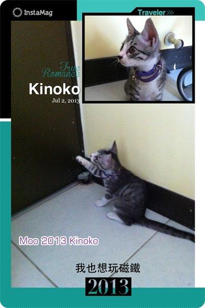 キノコ (Kinoko)