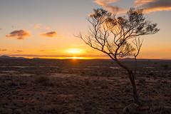 boolcoomatta july 2013 - 7220170 - oonartra loop (liam.jon_d) Tags: sunset creek landscape loop australian australia outback sa southaustralia acacia wattle bha mulga southaustralian olaryranges billdoyle olary salandscape acaciaaneura bushheritageaustralia abhf boolcoomatta bushheritage australianbushheritage australianbushheritagefund boolcoomattareserve oonartra oonartracreek oonartracreekloop redgumcreek redgumcreekloop