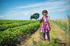 Strawberry Picking 2012 (Nao Okawa) Tags: red sky sun green sunshine june newjersey spring strawberry nikon farm harvest nj sunny blueskies picking hackettstown necterine donaldsonfarms nikond800