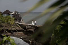 Wedding photosession in Bali (ntitov) Tags: ocean family wedding vacation two bali cliff love nature rock youth indonesia temple groom bride hands couple honeymoon young scene romance adventure romantic newlyweds tanahlot prewedding