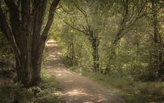 In The Forrest (Geir Vika) Tags: forrest sti vei sørlandet kristiansand vika geir randøya grusvei bildekritikk geirvika