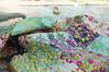 Lucky Girl pool (Lynn Carson Harris) Tags: quilt linen sewing luckygirl sisboom jenniferpaganelli