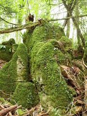 Puzzlewood, Forest of Dean, Gloucestershire (photphobia) Tags: trees tree green forest starwars woods rocks stones secret gloucestershire hidden trail mysterious maze pathway coleford ramble forestofdean pathways enchanting puzzlewood paulmurray photphobia uniqueforest enchantedpathways starwarsepisodevii possiblestarwarslocation