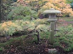 2013-10-20 [08] Den Haag (Reinoud Kaasschieter) Tags: netherlands japanesegarden nederland denhaag thehague zuidholland japansetuin parkclingendael clingendaelpark