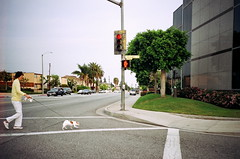 crossing with pets. (howard-f) Tags: pets film lomo candid streetphotography lomolca filmcamera southerncalifornia crosswalk expired expiredfilm rosemead