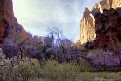 Early Morning In the Depths of the Canyon (lhg_11, 2million views. Thank you!) Tags: landscape utah scenic geology zionnationalpark nationalparkservice rockformations zioncanyon landscapephotography earlymorninglight nationparks mygearandme mygearandmepremium