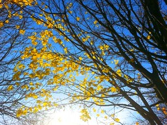 Winter is Near (Sumriana Babyana) Tags: november autumn trees winter cold fall leaves naked season golden leaf bare dry foliage crispy crisp wintertime coldweather crunchy drying blooming etruria wintry lateautumn wintrycold